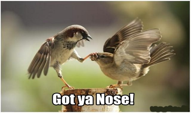 funny bird pictures own (24)