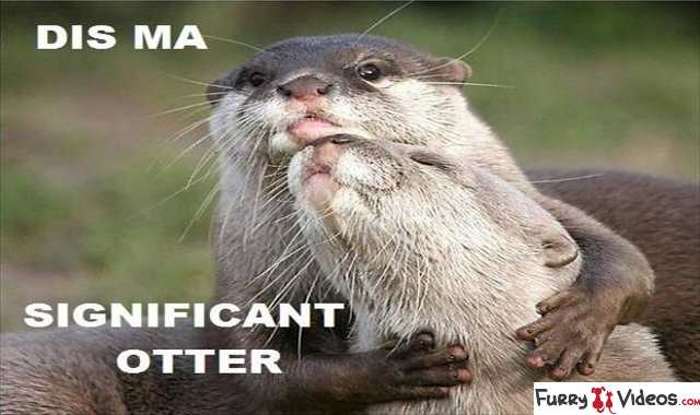 funny-otter-pictures