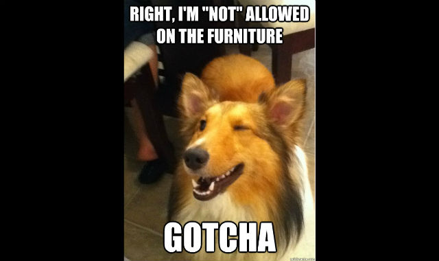 funny_animal_pictures_2