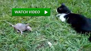 Cat And Armadillo Playing