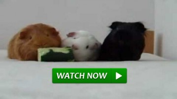 3 Hamsters and Cucumber