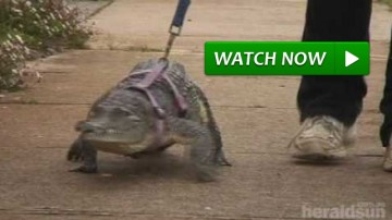 crocodile acts like a dog