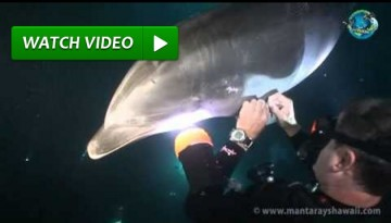 Dolphin's Reaction is Just Priceless!